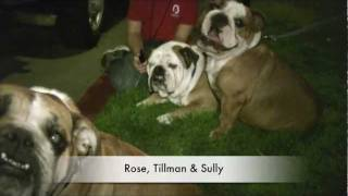 Tillman & Friends on the Night Before the 2012 Rose Parade - Presented By Petco
