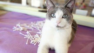 1000 Q-Tips = A CAT