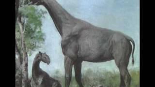 Tribute to Indricotherium aka Baluchitherium aka Paraceratherium