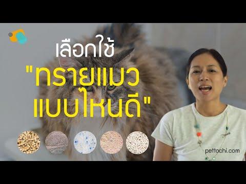 pettochi : เลือกใช้ทรายแมวแบบไหนดี