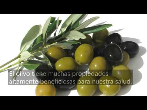 Hierbas y plantas medicinales 2 el olivo youtube for Hierbas y plantas medicinales