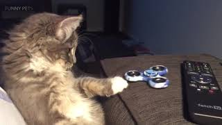 Funny Cats  Cute and Furry Cats Part 2 Funny Pets