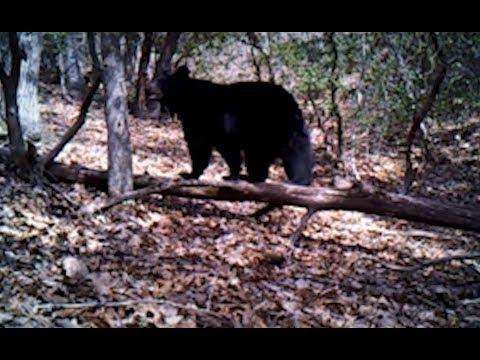 Top 5 wildlife video captures of 2018 (in Henderson County)
