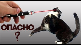 Лазерная указка для кошек, опасна? ВетОтвет