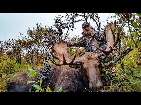 BOWHUNTING MOOSE!  | Alaska Yukon Hunting Adventure