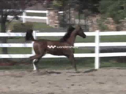 MTCI Horse Presentation_Title_01_01.avi