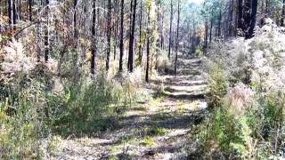 Homes for Sale - Ogden Rd. - Woodville, MS 39669 - Felix Bates