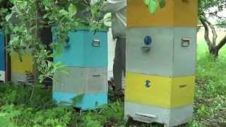 видео Учебник пчеловода. Паразиты пчелиной семьи и хищники пчел
