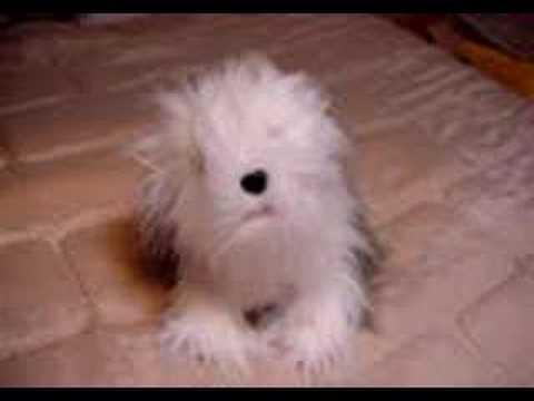 Valentine's Day Dog Plush Singing Animated ONLY YOU