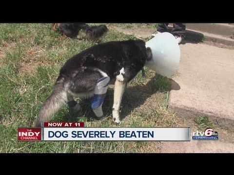 Man's dog badly beaten