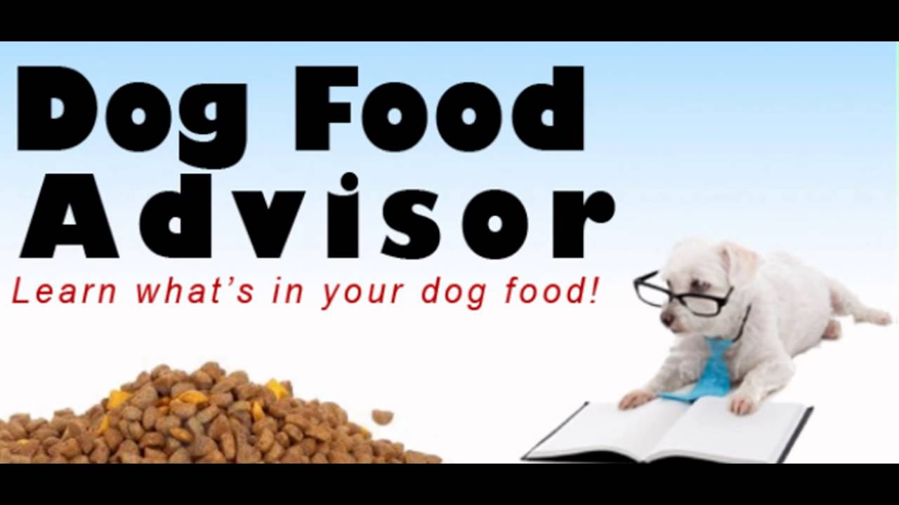 How To Select Top Rated Healthiest Dog Food High Quality Dog Food