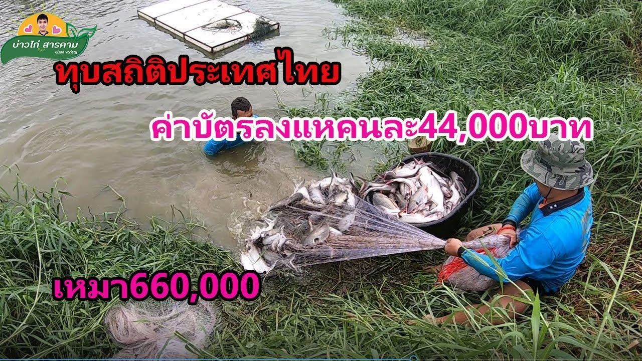 ตอนที่2  ทุบสถิติโลกลงแหจับปลาบัตรแพงแห่งปี เหมาบ่อ660,000หาร15คน คนละ44,000บาท คลิปที่103