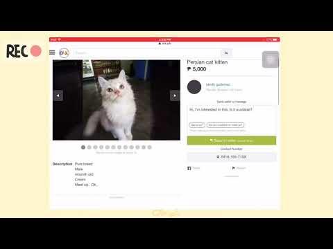 Persian cat kitten (olx.ph)