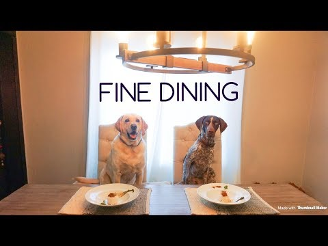 DOGS eat Indian Food