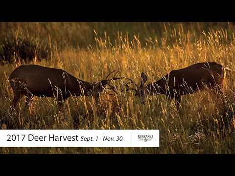 Nebraska's 2017 Fall Deer Harvest Numbers