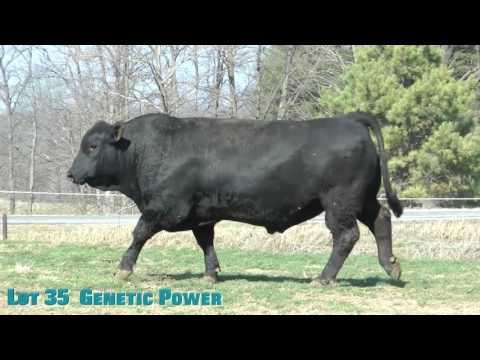Lot 35  Genetic Power