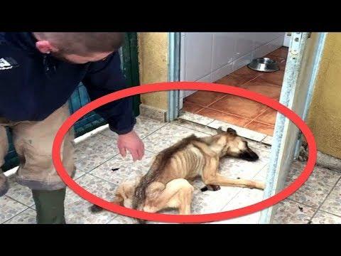 Ovaj pas nije jeo 10 mjeseci, a ono što se desilo nakon toga je nevjerovatno