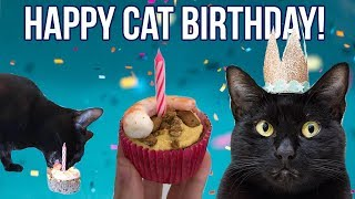 Throwing the BEST Cat Birthday Party (with CAKE recipe!)