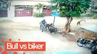 Man Survives after Getting Hit by Charging Bull