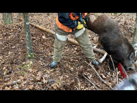 Hog Hunting!🐗🔪(Explicit)