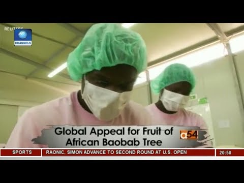 Global Appeal For Fruit Of African Baobab Tree | Africa 54 |