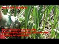 Vivi S Kitchen Garden 90 Responsible Foraging Sowing Carrots And Basking In Sunshine mp3