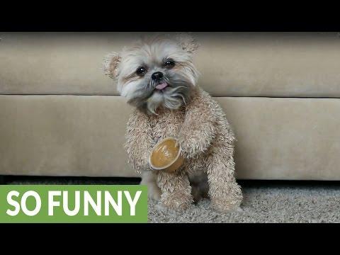 Munchkin The Teddy Bear Loves Peanut Butter