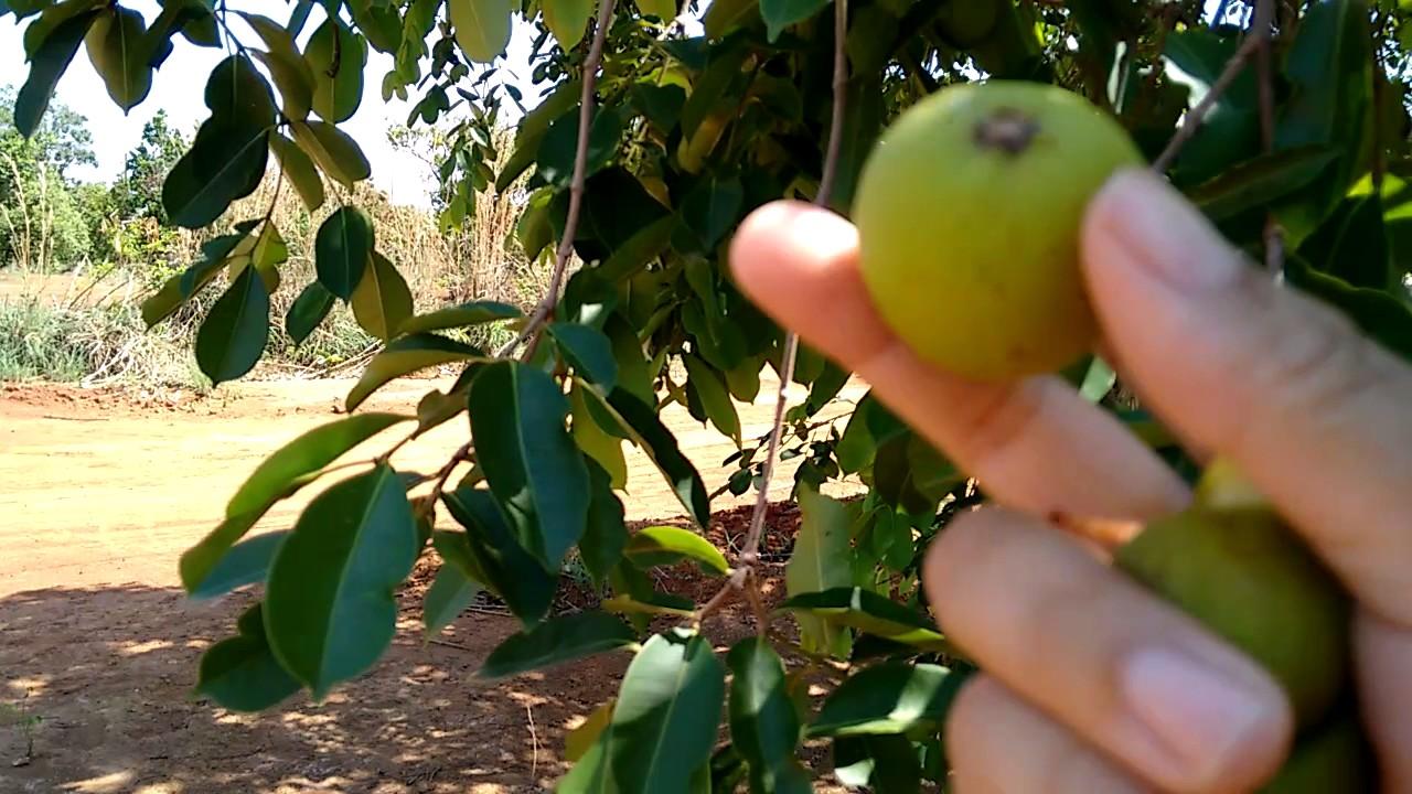 Que fruta deliciosa - 3 7
