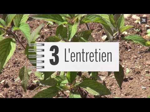 Jardin : Comment cultiver un potager bio ?