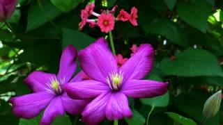 LANG LANG - FRANZ LISZT - TROIS ETUDES - UN SOSPIRO IN D-Flat Major - GORGEOUS FLOWERS JUST FOR YOU