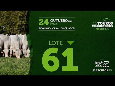 LOTE 61 - LEILÃO VIRTUAL DE TOUROS MELHORADORES  - NELORE OL - PO 2021