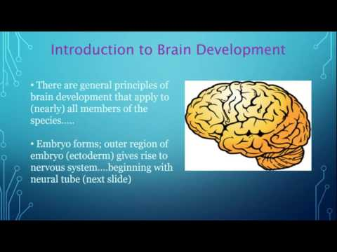 A User's Guide to How (and How Not to) Build a Brain