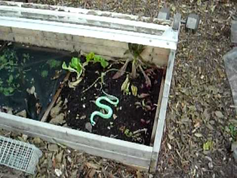 Winter Garden with Cold frames and Low tunnels in zone 6b Part 3