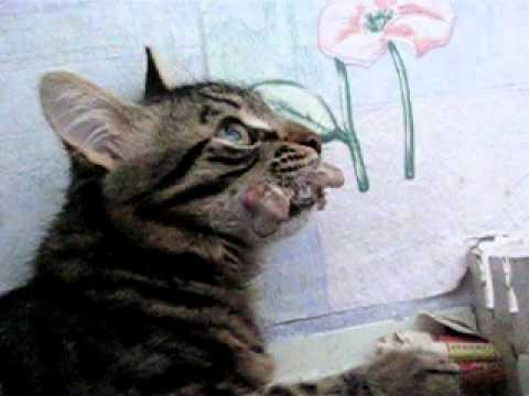 видео про жадного кота с сосисками