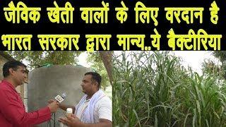 जैविक खेती के लिए वरदान ये बैक्टीरिया Jaivik Kheti Best Example Of Organic Farming (Jaivik Kheti)
