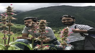 NOIDA TO VALLEY OF FLOWERS: PART 03 : on ACTIVA 3G