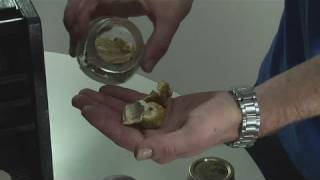 How To Dry Mushrooms Using A F…