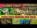 Suara Pikat Burung Cici Sawah  Mp3 - Mp4 Download