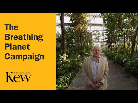 Kew Gardens - The Breathing Planet Campaign