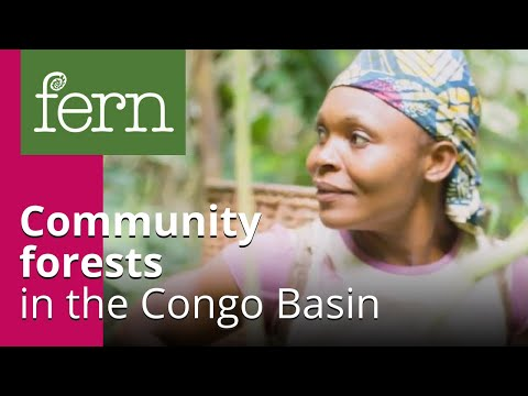 Community forests in the Congo Basin: What is the EU's role?