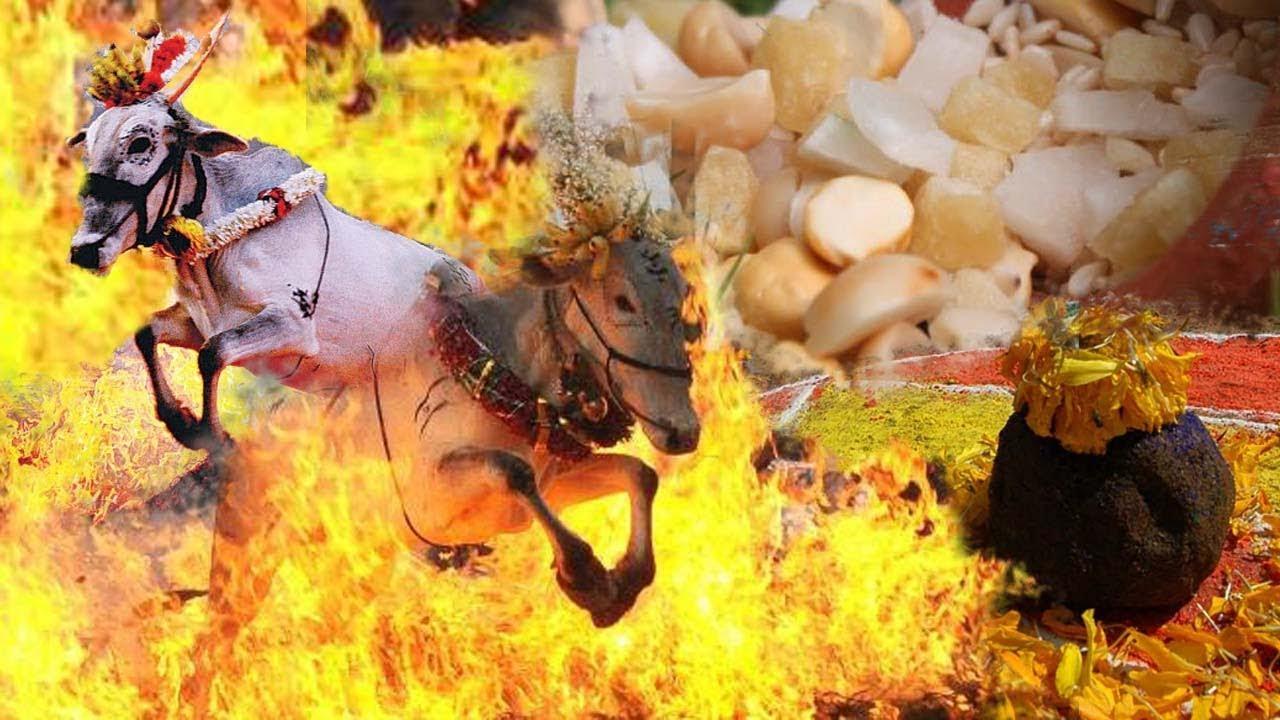 sankranti festival kannada
