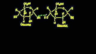 2.3 Monosaccharide monomers are linked together by condensation reactions