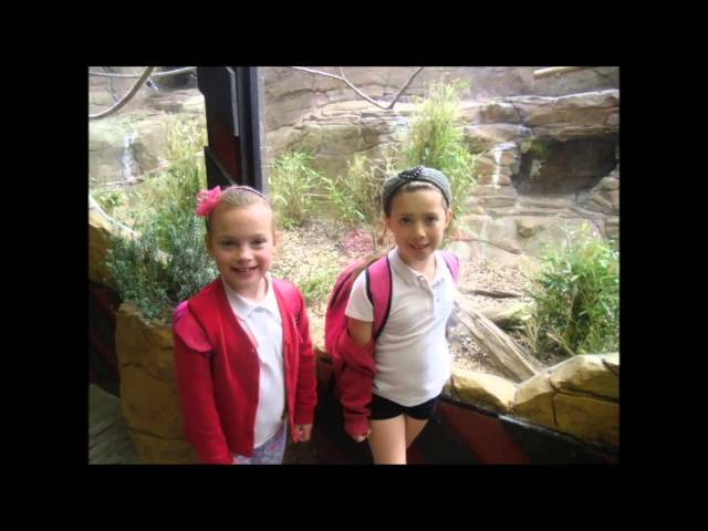 Year Two head to the Zoo!