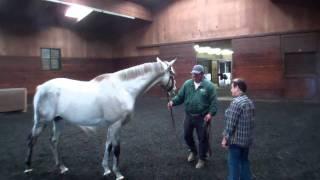 Visit with Giacomo Oct. 24th @ Magali Farms