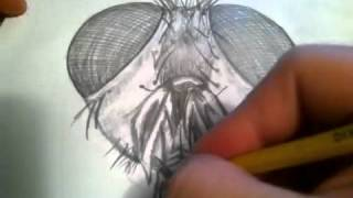 Time-lapse fly man drawing