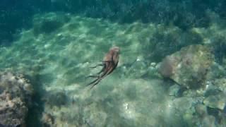 Секс с осьминогом под водой! Мечты о любви