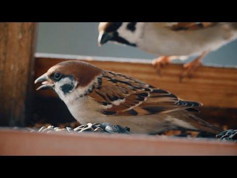 Jak správně přikrmovat ptáky