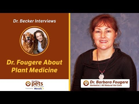 Dr. Becker and Dr. Fougere Talk About Plant Medicine