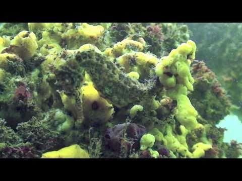 Underwater Sydney