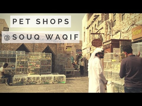 Pet Shops in Souq Waqif | Qatar Market